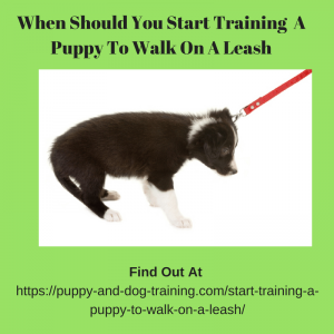 when should you start training a puppy to walk on a leash