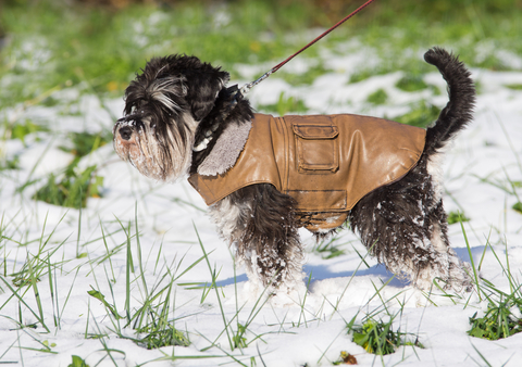 how to potty train a dog in the winter