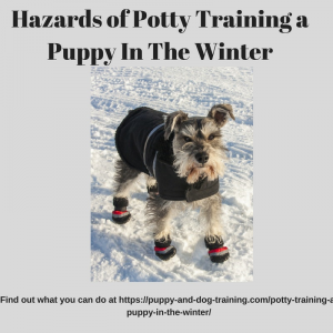 hazards of potty training your puppy in the winter