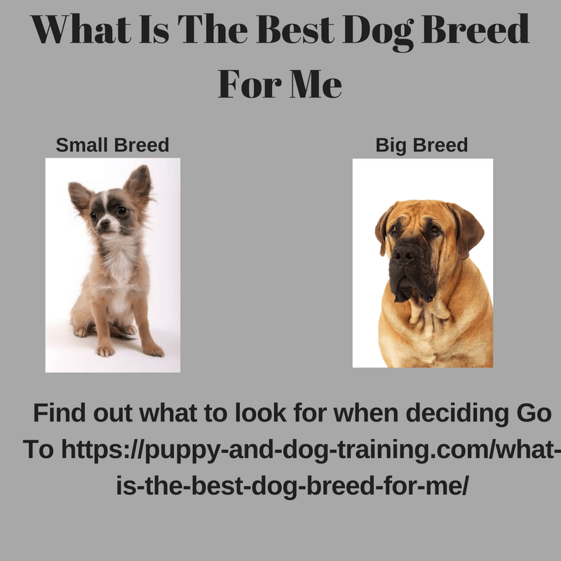 Find dog breed for me breed dogs spinningpetsyarn for Best dog breed for you