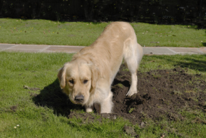 ways to stop dogs from digging