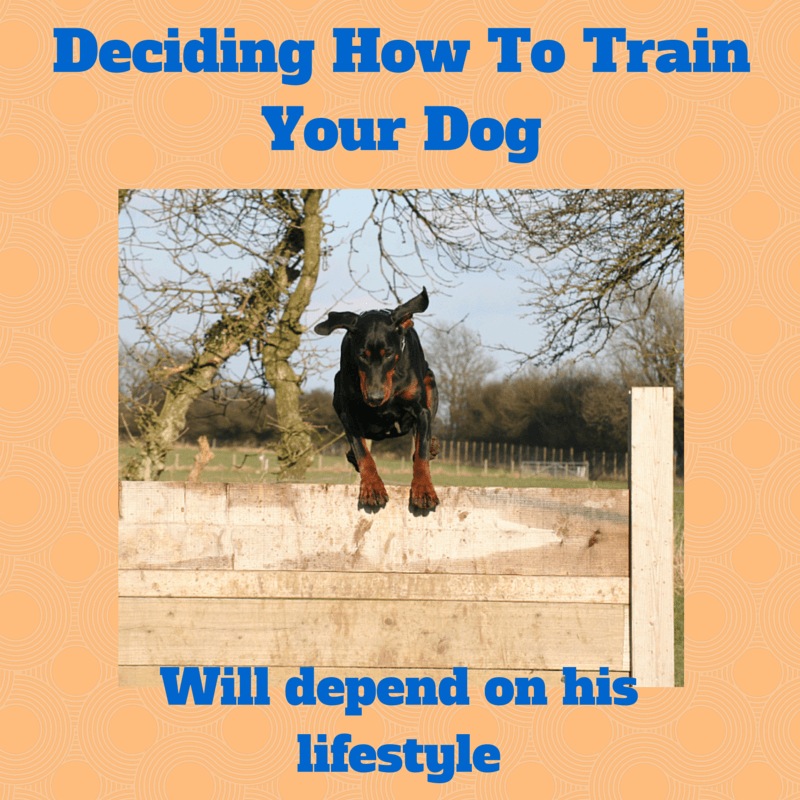 how to train your puppy or Check out our free dog potty training advice tips to stop your older dog from eliminating in the house.