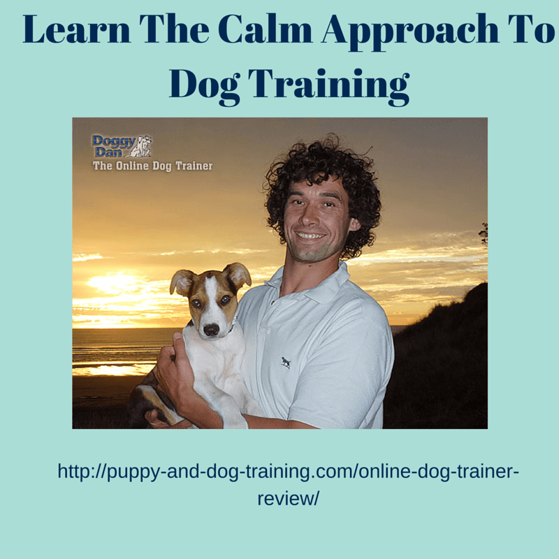 Online Dog Trainer Review  Puppy And Dog Training. Sustainable Houses For Sale Uc College Apps. What Is The Best Place To Buy A Domain Name. Pool Builders Austin Tx Create A Good Website. Wedding Photography School Rise Cash Advance. Family Law Attorney Durham Nc. Italian Restaurants Columbus Oh. Heart Palpitations And Fatigue. Netflix Time Warner Cable V A Mortgage Loans