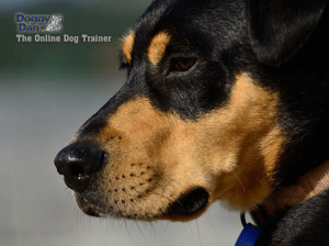 online dog training review