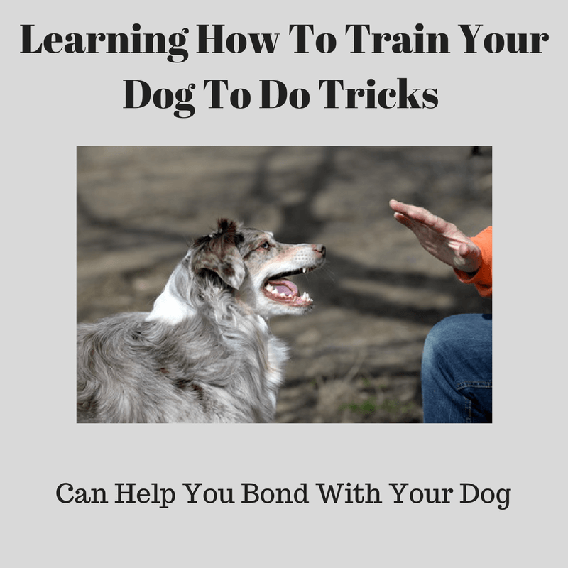 How To Train Your Dog To Stop Jumping On You