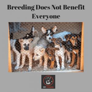 dog breeding problems